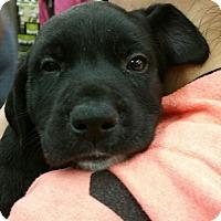Adopt A Pet :: Lucy - Ogden, UT