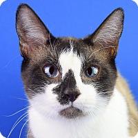 Adopt A Pet :: Winston - Carencro, LA