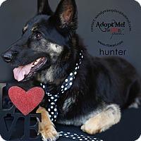 Adopt A Pet :: HUNTER - Pacific Palisades, CA