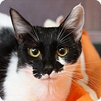 Adopt A Pet :: Shelley - Sarasota, FL