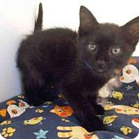 Adopt A Pet :: *ASTON - Upper Marlboro, MD