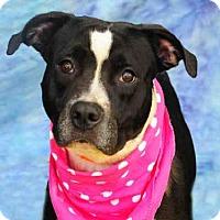 Adopt A Pet :: BABY GIRL - Louisville, KY