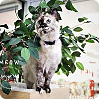 Domestic Mediumhair Cat for adoption in Kansas City, Missouri - Mow