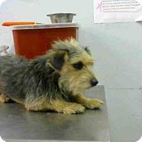 Adopt A Pet :: JONATHAN - Atlanta, GA