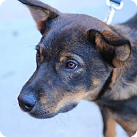 Adopt A Pet :: Luke - Morganville, NJ