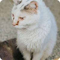 Adopt A Pet :: Tilda - Indianapolis, IN