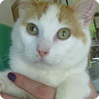 Adopt A Pet :: Kugel - Menomonie, WI