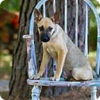 Adopt A Pet :: Anna - Rexford, NY