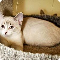 Adopt A Pet :: Spirit - Trevose, PA