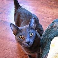 Adopt A Pet :: TEALC & CHEWEY - Gilbert, AZ