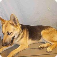 Adopt A Pet :: DAISY - Upper Marlboro, MD