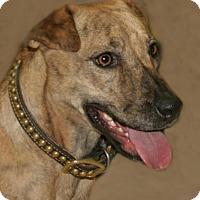 Adopt A Pet :: Annie - Lufkin, TX