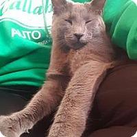 Adopt A Pet :: Juju - Wichita, KS