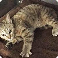Adopt A Pet :: Elsa - Mt. Prospect, IL