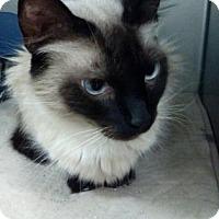 Adopt A Pet :: Cotton - Titusville, FL