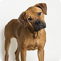 Adopt A Pet :: Jessie - Baton Rouge, LA