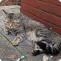 Adopt A Pet :: Flapjack - Monroe, GA