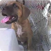 Adopt A Pet :: Moose - Fowler, CA