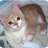 Adopt A Pet :: Simon - Marietta, GA