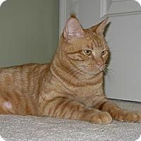 Adopt A Pet :: Apricat - Reston, VA