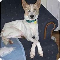 Adopt A Pet :: Gunner - Waukesha, WI