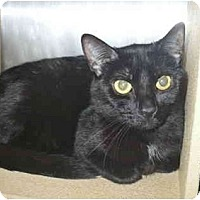 Adopt A Pet :: Midnight - good with dogs - Colmar, PA