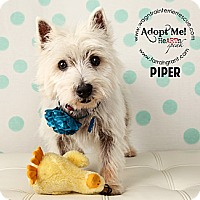Adopt A Pet :: Piper-pending adoption - Omaha, NE