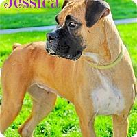 Adopt A Pet :: Jessica - Scottsdale, AZ