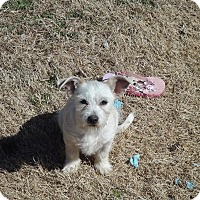 Adopt A Pet :: Sophie In Tulsa - Oklahoma City, OK