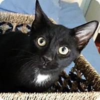 Adopt A Pet :: NCIS--Leroy Jethro Gibbs - Florence, KY