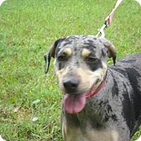 Adopt A Pet :: BUELLA - Odessa, FL