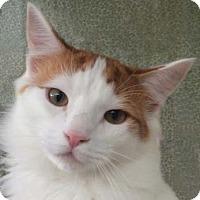 Adopt A Pet :: Benny - Tiburon, CA