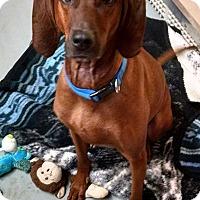 Adopt A Pet :: Charlie - St. Charles, MO