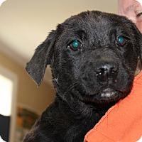 Adopt A Pet :: Jamie - Harmony, Glocester, RI