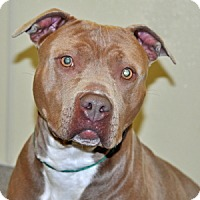 Adopt A Pet :: Hazel - Port Washington, NY