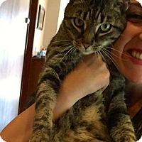 Adopt A Pet :: Ace - Island Park, NY