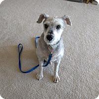 Adopt A Pet :: Justice - Laurel, MD