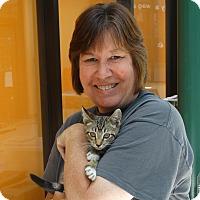 Adopt A Pet :: Sam - Elyria, OH