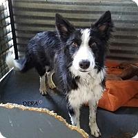 Adopt A Pet :: DERA - Gustine, CA