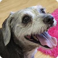 Adopt A Pet :: Jillian - High Point, NC