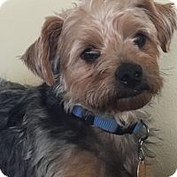 Adopt A Pet :: Bo Diddley - The Village, FL