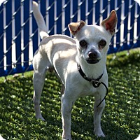 Adopt A Pet :: Robert - Chula Vista, CA