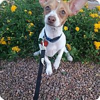Adopt A Pet :: Chiching - Las Vegas, NV