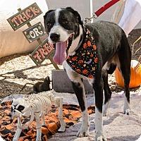 Border Collie Mix Dog for adoption in Phoenix, Arizona - BARTON