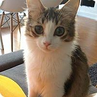 Adopt A Pet :: Fixy - Toronto, ON