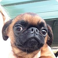 Adopt A Pet :: Maebe - Cumberland, MD
