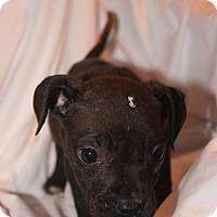 Adopt A Pet :: Outback - Gilbertsville, PA