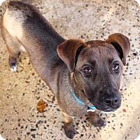 Adopt A Pet :: Lakota - Coopersburg, PA
