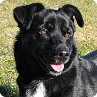 Adopt A Pet :: Trixie - Nashville, IN