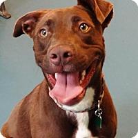 Adopt A Pet :: Miriam - Waynesboro, PA